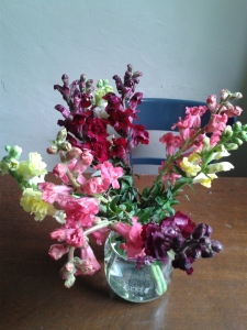 snapdragon on my kitchen table