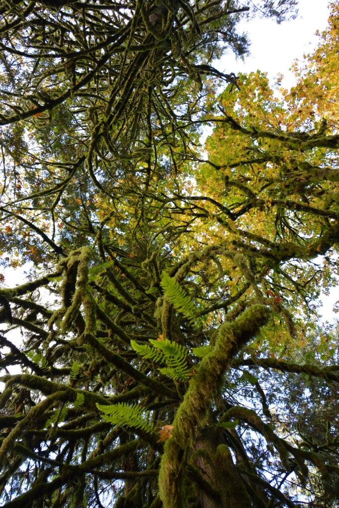 Rainforest North Vancouver